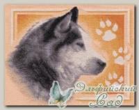 PANNA Набор для вышивания Ж-1050 *Сибирский хаски*